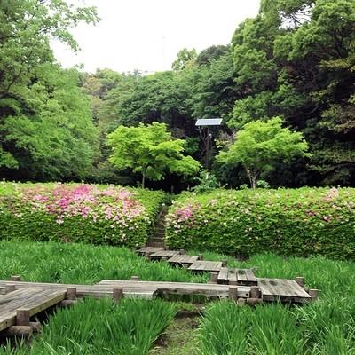 01-緑地公園.jpg