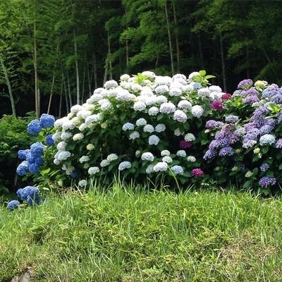 June_15__2015_at_1242PM.jpg