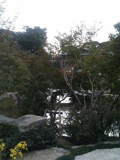 image/kurochiyo-2005-11-08T14:10:06-1.JPG