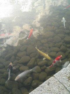 image/kurochiyo-2005-11-08T14:25:42-1.JPG