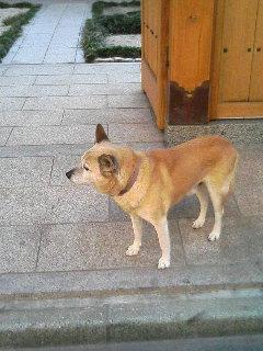 image/kurochiyo-2005-11-20T09:39:24-1.JPG