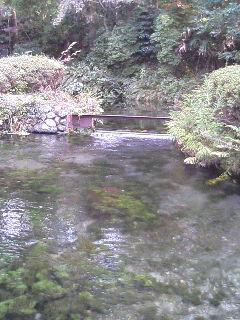 image/kurochiyo-2005-11-22T10:41:46-1.JPG