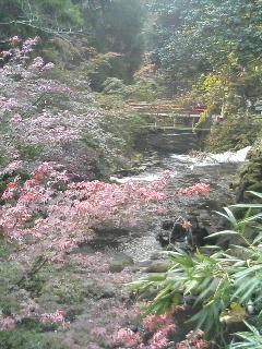 image/kurochiyo-2005-11-22T10:45:53-1.JPG