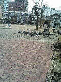 image/kurochiyo-2006-01-13T09:42:30-1.JPG