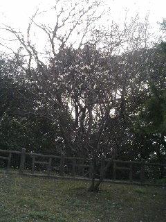 image/kurochiyo-2006-03-08T16:35:38-1.JPG