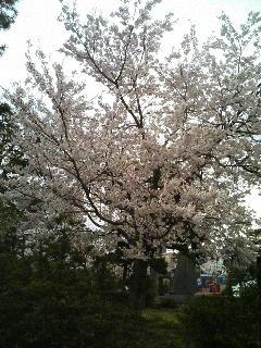 image/kurochiyo-2006-04-05T16:29:03-1.JPG