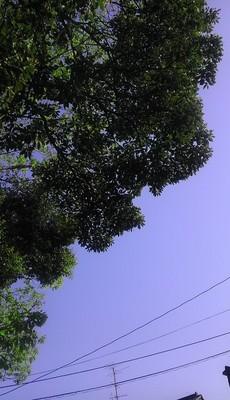 IMAG0856.jpg