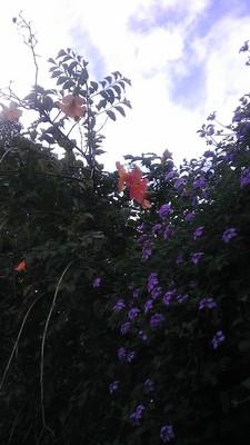 IMAG1569.jpg